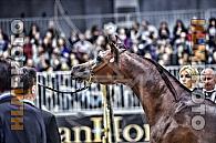 Salone del cavallo Arabo